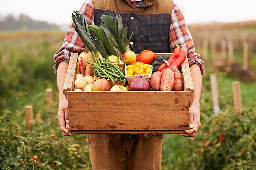 6 преимуществ покупки фруктов и овощей онлайн