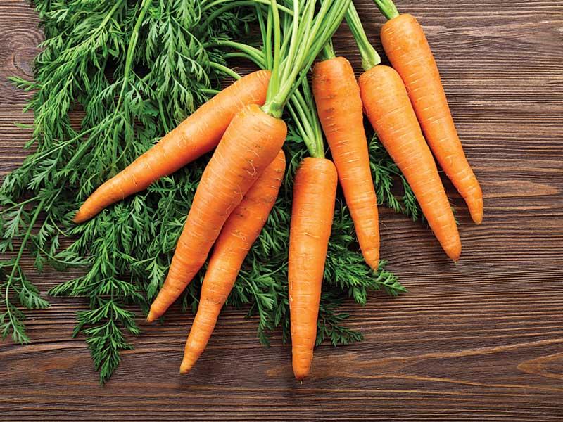 Морковь: незаменимый продукт