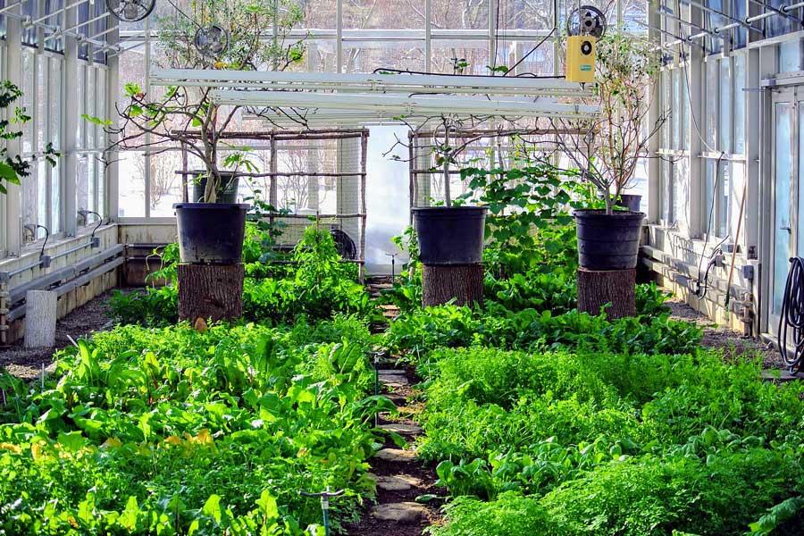 О тепличное овощеводство
