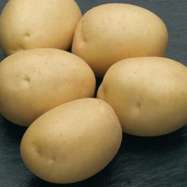 купить картофель опт онлайн
