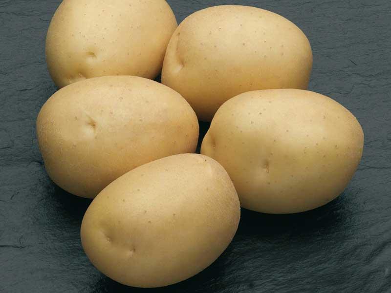 """Картофель """"Наташа"""""""