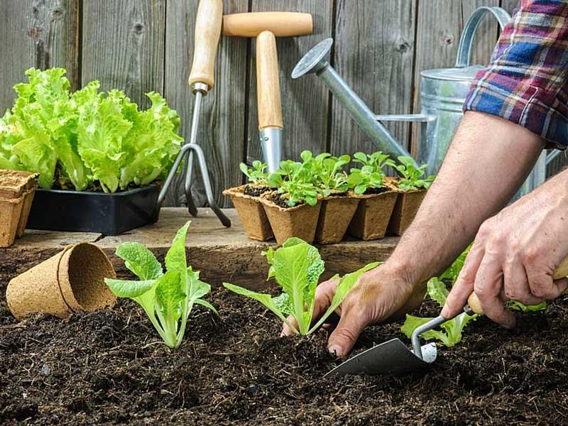 Рекомендации начинающим садоводам