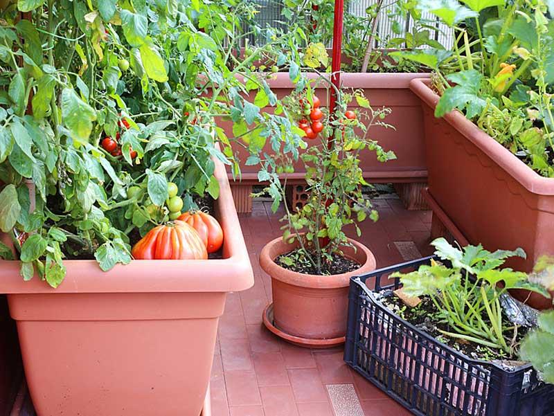 Огород на балконе-как и что сажать?