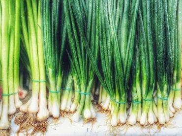 Профиль Растения Лук-Шалот (Зеленый Лук)