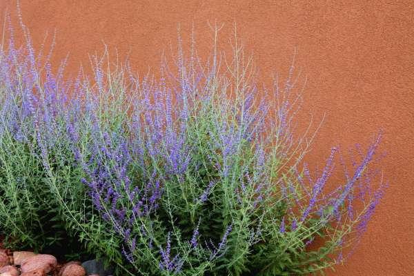 Высокие травы для садового пейзажа