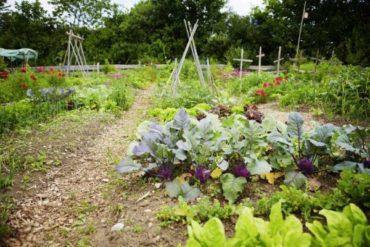 Подготовка огорода к осени