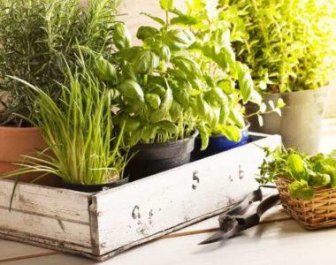 Что такое декоративная трава?