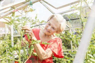 Как и зачем обрезать растения томатов