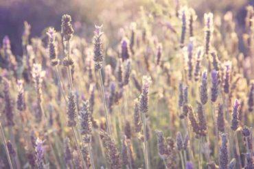 Знаки гороскопа и соответствующие травы