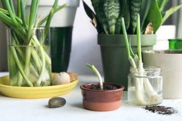Садоводство для начинающих
