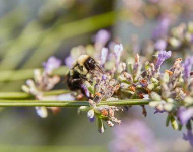 5 полезных насекомых для вашего огорода