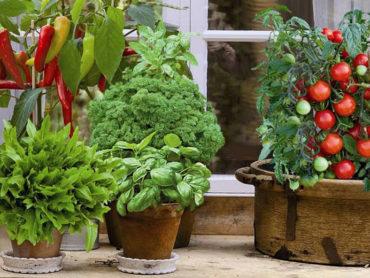 Топ-10 овощей для выращивания в Вашем саду