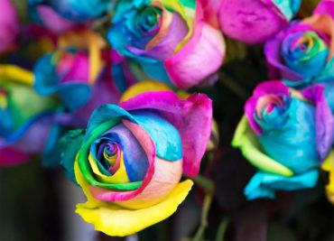Как создать радужные розы