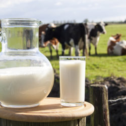 Молоко коровье, фермерское волгоград